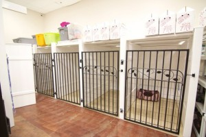 Pet Resort Rooms